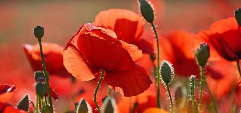 Commemorating WWI: Armistice 100