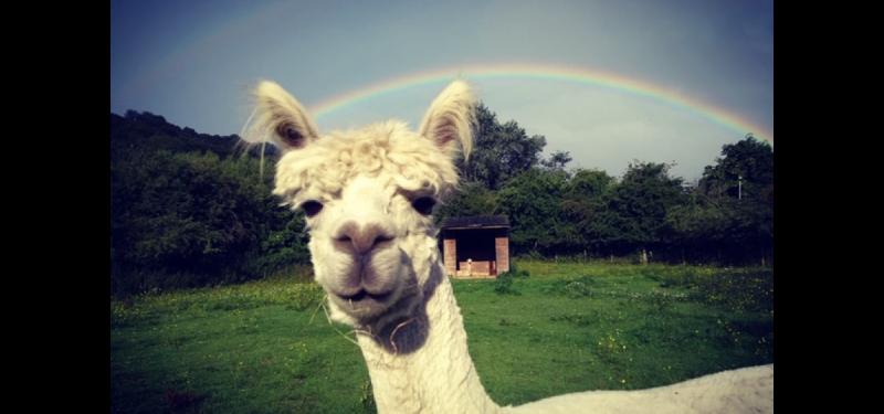 Animal Art Class: Meet The Alpaca!