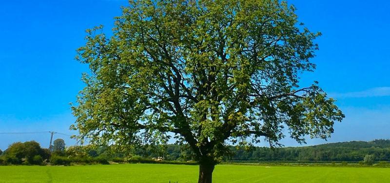 Green Week: Mr Quercus